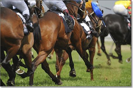 Australian gambling on horses