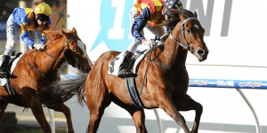 stradbroke winner 2016 betting