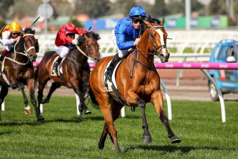 Godolphin star Hartnell is one of five contenders for Victorian Horse of the Year