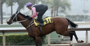 Zac Purton and Beauty Only trial at Sha Tin