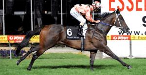 Australia Stakes betting