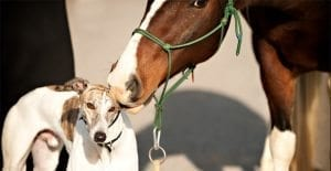 greyhound and horse racing