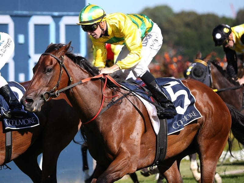 Coolmore classic betting sites betting stats soccer goal replacement