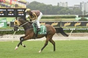 Tavago racehorse