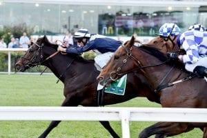 Supido betting Rosehill