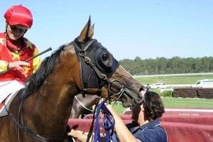 Canberra horse Clipper