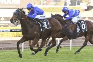 Allergic wins at Randwick