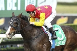 Caulfield race next for Canberra filly