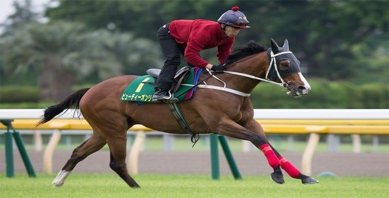 Yasuda kinen betting odds free sports betting analysis software