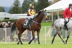 Art Deco wins at Tauranga
