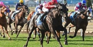 Greviste wins at Moonee Valley