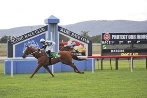 Mister Marmalade wins at Scone