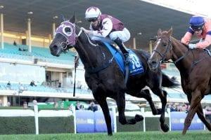 NZ stayer Megablast on seven-day back-up