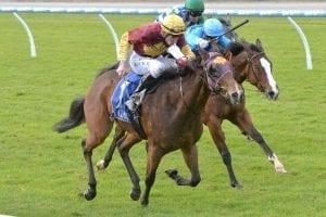 Miss Iano wins at Pakenham on may 31