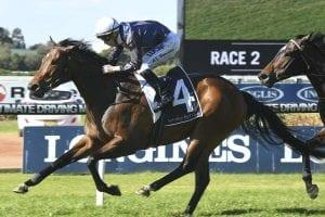 Insensata wins again at Rosehill