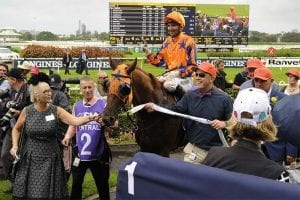 NZ galloper Gingernuts
