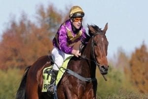 NZ racing wrap: Track in good order for No More Tears