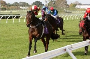 Gentil Tonton returns to favoured track for Taumarunui Gold Cup