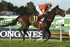 Calanda wins the Schweppes Handicap at Rosehill