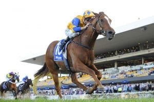Extensible wins at Rosehill Gardens in 2016