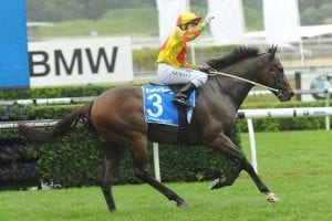 Lankan Rupee wins TJ Smith Stakes
