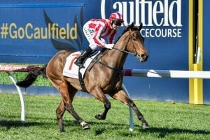 Strong winds predicted for Caulfield races