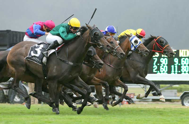 Horse betting tips nz binary options refundable airline