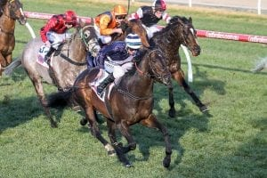 Supido resumes with Monash Stakes win