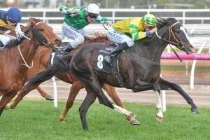 Pacodali wins again at Flemington