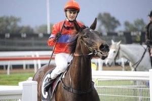 Taylor Marshall jockey