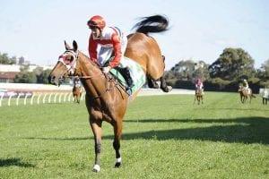 First Queensland winner for Richard Litt