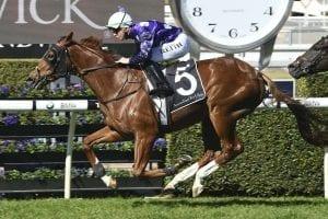Shogun Sun racehorse