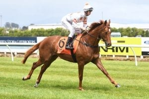 Promising NZ galloper Astor