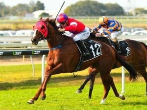 Marty leads the party at Doomben