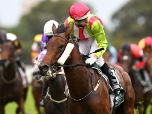 Star-studded entries for Lawrence Stakes