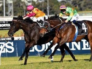 Classic Uniform racehorse