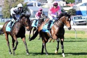 Highlad franks Victorian Derby form at Te Rapa