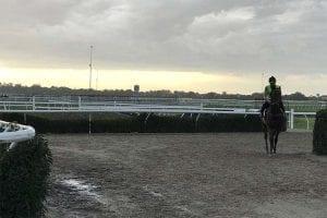 Horse training centre at Cranbourne, Victoria