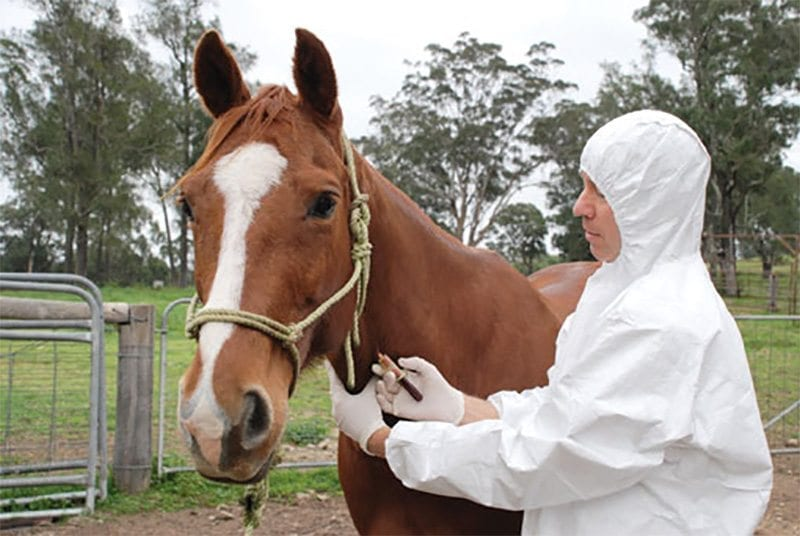 A Decade On, Is Australia Ready For An Equine Influenza