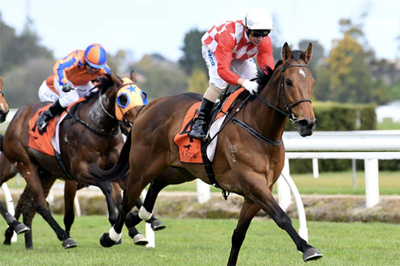 NZ horse Killarney