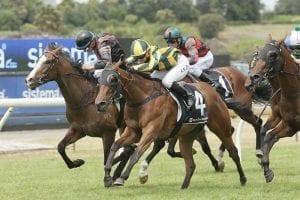 Swissta NZ racehorse