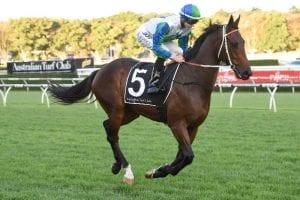 Bullrush racehorse