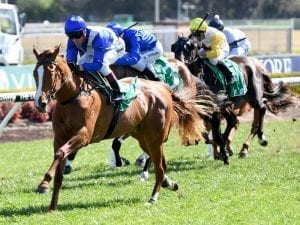 Eye-catching debut for Singo-owned filly