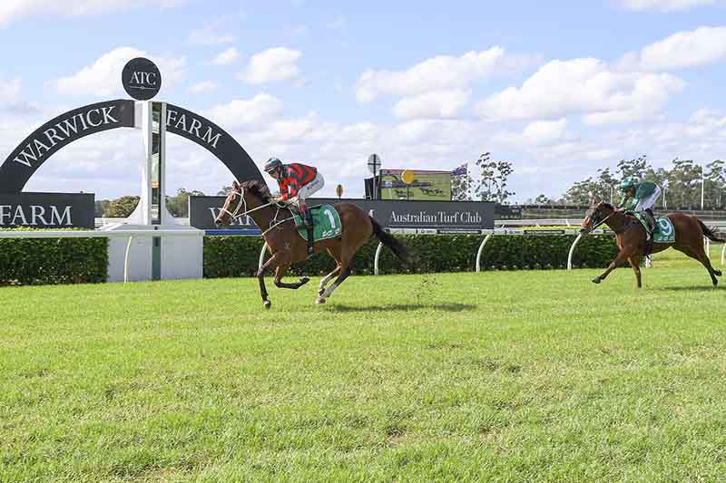 Epsom Handicap Contender Egg Tart Will Have A Race Day Gallop At Rosehill Ahead Of Its Next Group One Task Photo Bradley Photos