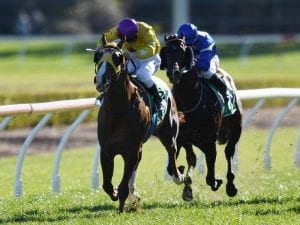 Gold Standard thriving ahead of Gr 1 Rose