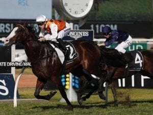 Scratching changes pace of Run To The Rose