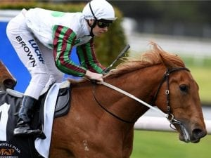 Blondie out to enhance Guineas prospects