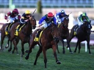 NZ mare Bonneval in winning spring return