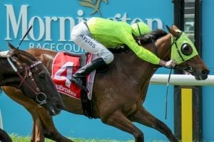 Sin To Win proves too strong at Mornington