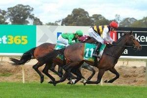 Lord Fandango wins at Benalla